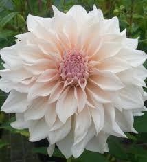 standing flower bandung